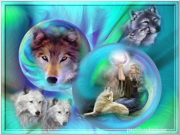 fonds d ecran animaux divers