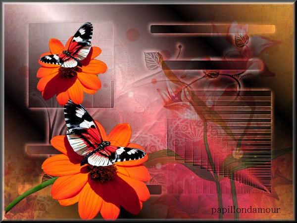fonds ecran papillons